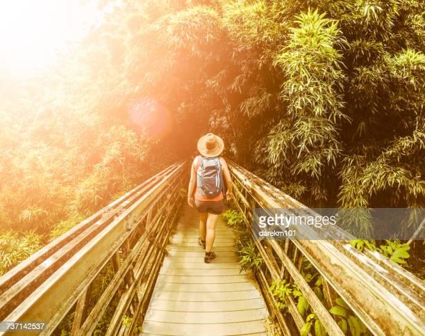 Female Hiker in a Bamboo Forest, Pipiwai, Maui, Hawaii, America, USA