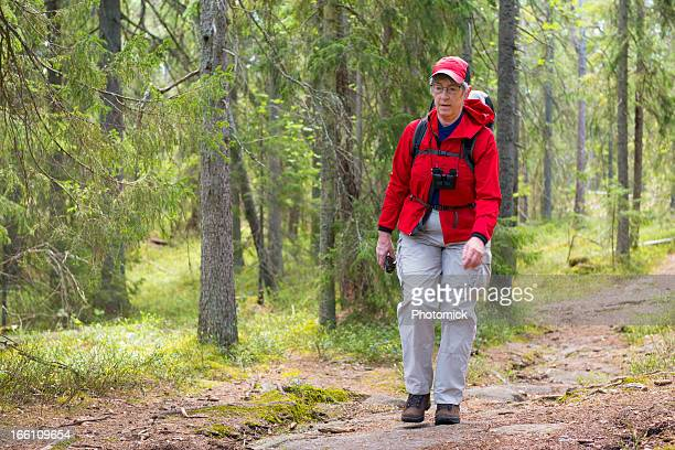 female hiker in old forest - norrbotten province stock photos and pictures