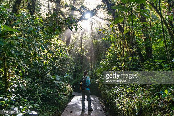 Female hiker pauses to look upwards into jungle