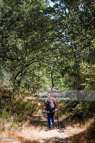 Female hiker walking up a footpath with trees near Castro Laboreiro, PORTUGAL