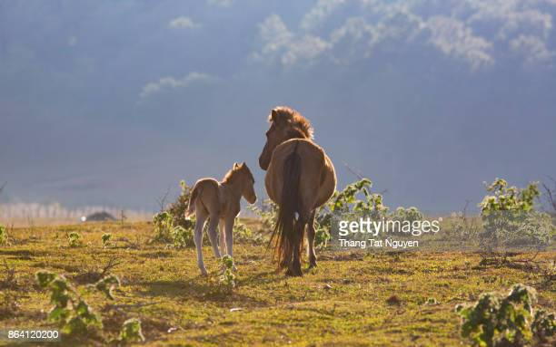 Female horse and her pony on grass field