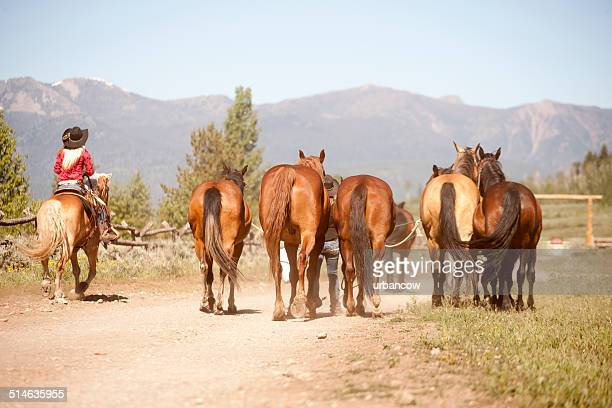Female Horse herder, Montana