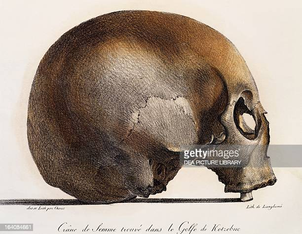 Female human skull found in the Gulf of Kotzebue, Kamchatka, by Dr Gall, expedition doctor, engraving from Picturesque voyages around the world, by...