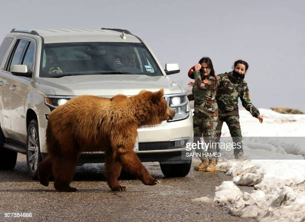 Female Iraqi Kurdish peshmerga fighters and journalists watch on as they release a bear into the wild in the Gara Mountains near the northern Iraqi...