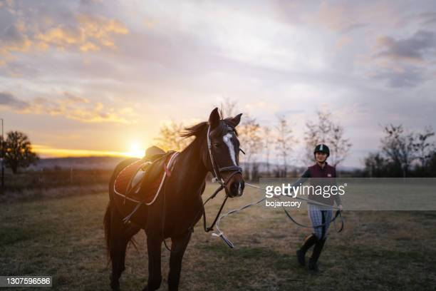 female jockey trains a horse outdoors - horse stock pictures, royalty-free photos & images