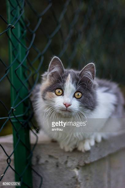 female kitten - annfrau stock pictures, royalty-free photos & images