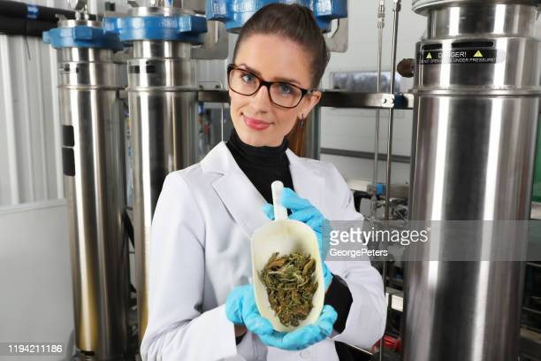 female lab technician processing cbd oil from hemp - cbd oil stock pictures, royalty-free photos & images