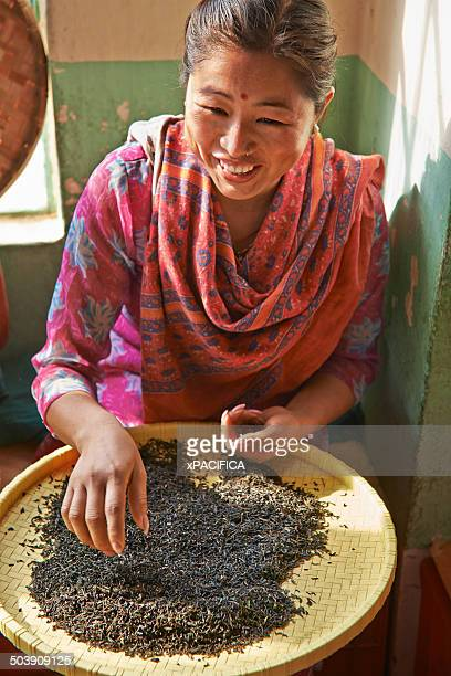 A female labor worker sorting dried tea leaves