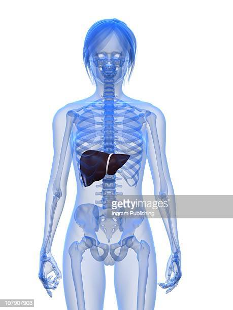 female liver - cirrhosis stock pictures, royalty-free photos & images