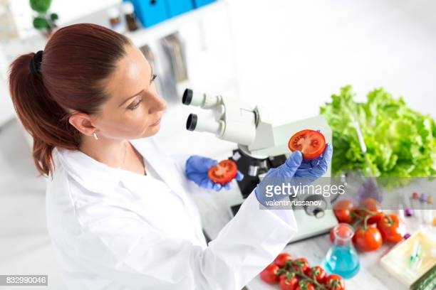 female microbiologist making researches on tomato in laboratoty - microbiologist stock pictures, royalty-free photos & images