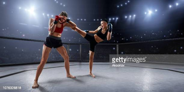female mma fighters in professional boxing ring - combat sport stock pictures, royalty-free photos & images