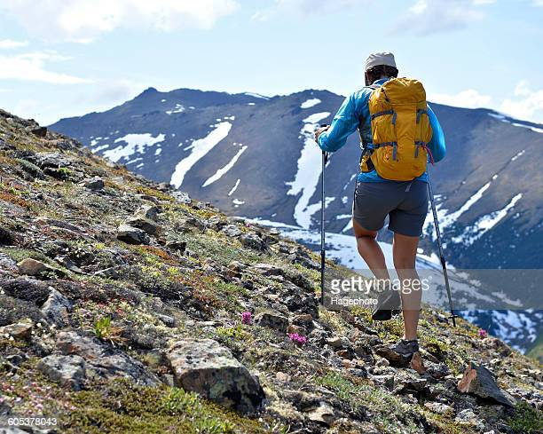 Female mountain climber walking uphill, rear view, Chugach State Park, Anchorage, Alaska, USA