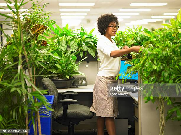 Female office worker tends to plants that surround by cubicle