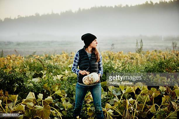 Female organic farmer harvesting squash
