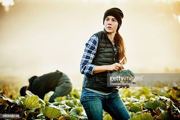 Female organic farmer in field harvesting squash