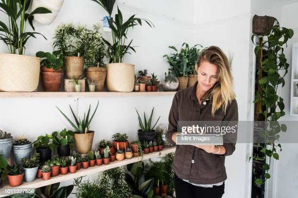 female owner of plant shop standing next to a selection of plants on wooden shelves, holding digital tablet. - blumentopf stock-fotos und bilder