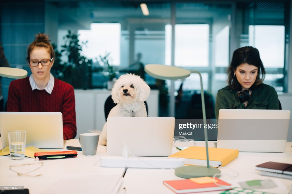 Female professionals using laptops while sitting with dog at desk in creative office : Stock Photo