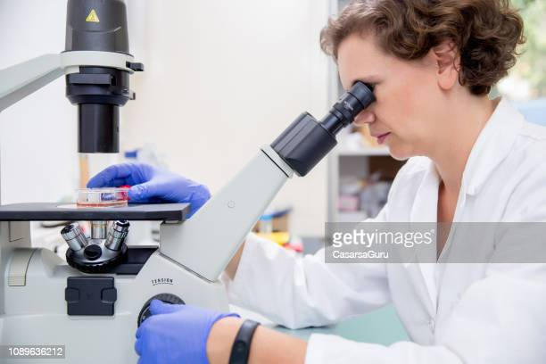 female researcher examining scientific sample under a professional microscope - microbiologist stock pictures, royalty-free photos & images