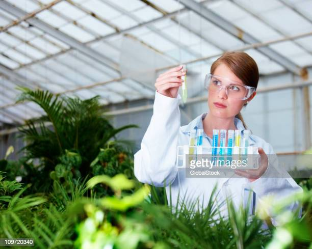 Female researcher examining with test tube in a greenhouse