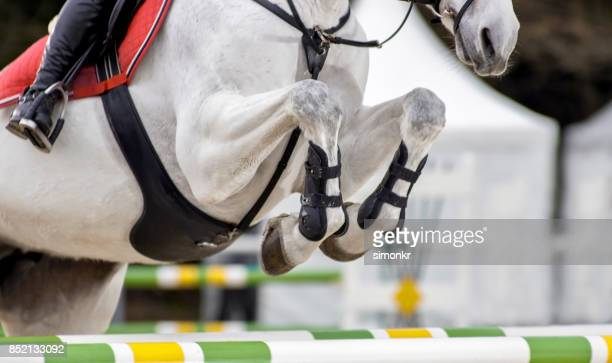 female rider jumping an obstacle on chestnut horse - thoroughbred horse stock photos and pictures
