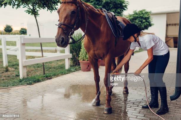 female rider with her horse - thoroughbred horse stock pictures, royalty-free photos & images