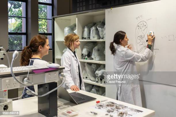 Female Science Researchers Discussing Work