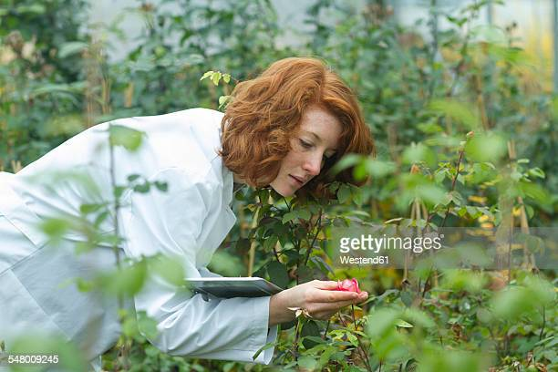Female scientist controlling plants in a greenhouse