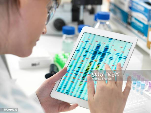 female scientist examining dna sequence results on digital tablet in laboratory - test results stock pictures, royalty-free photos & images