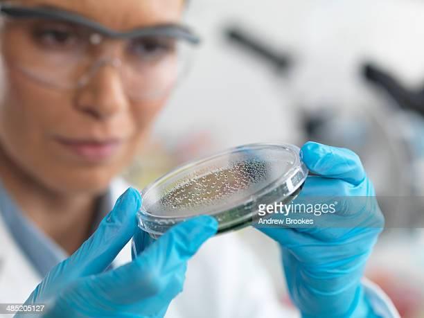 Female scientist examining micro organisms in petri dish