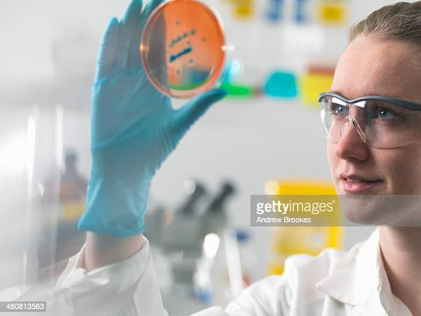 Female scientist examining microbiological cultures in a petri dish