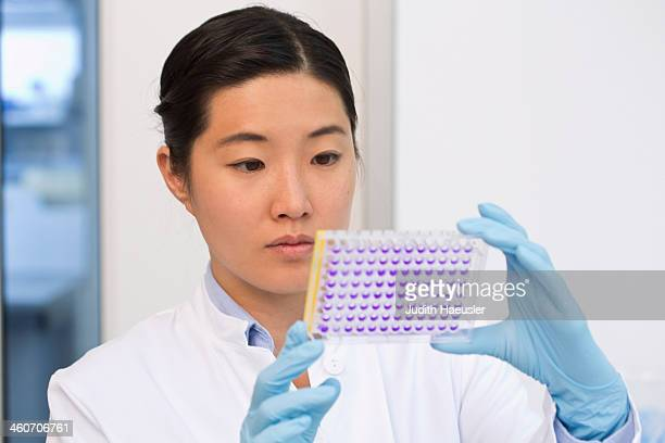 female scientist examining samples in microtiter plate with crystal violet solution - purple glove stock pictures, royalty-free photos & images