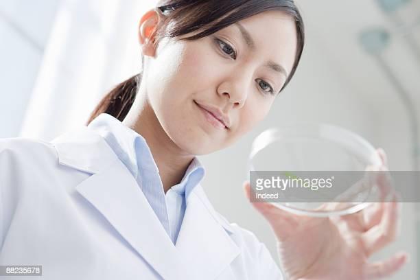 Female scientist looking at petri dish
