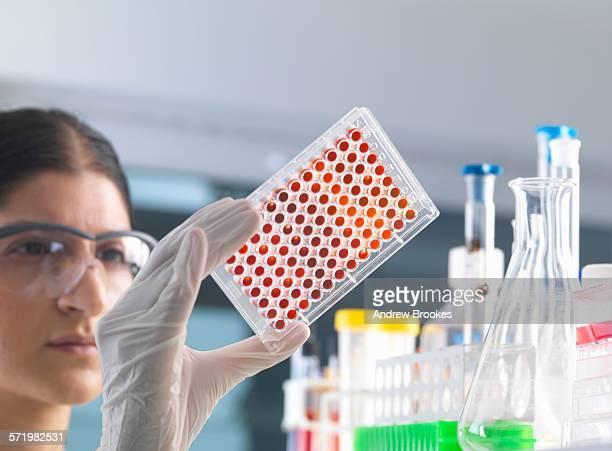 Female scientist testing micro plate blood samples in laboratory