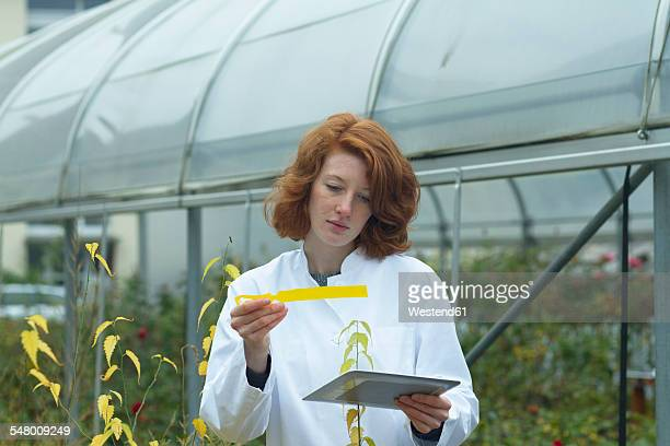 Female scientist with digital tablet controlling plants in a greenhouse