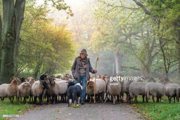 Female Shepherd and flock of sheep  and her dogat a foggy sunrise in the woods