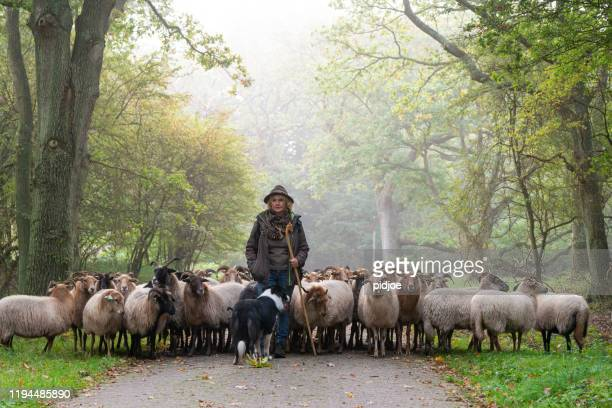 Female Shepherd and flock of sheep at a foggy sunrise in the woods