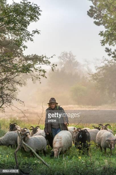 Vrouwelijke herder en een kudde schapen op een mistige zonsopgang in de bossen