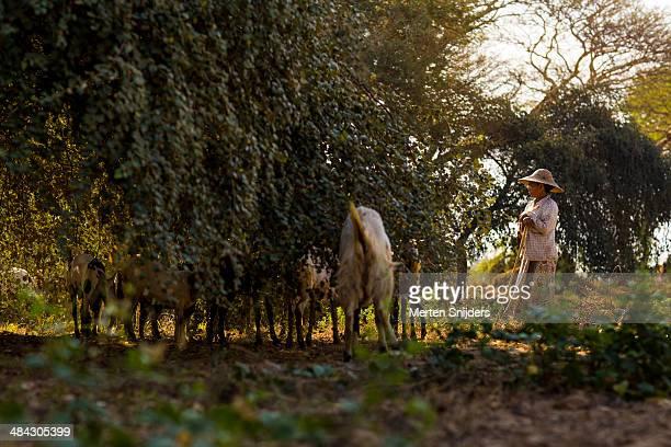 female shepherd leaning on stick - merten snijders photos et images de collection