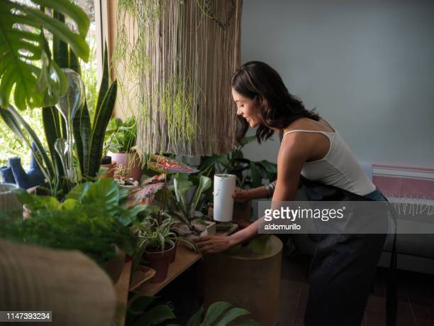 female shop keeper tending the plants at a garden store - houseplant stock pictures, royalty-free photos & images