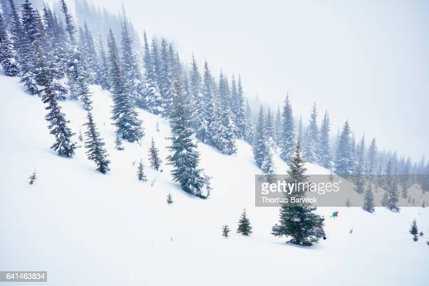 Female skier skiing through trees during descent on backcountry ski tour