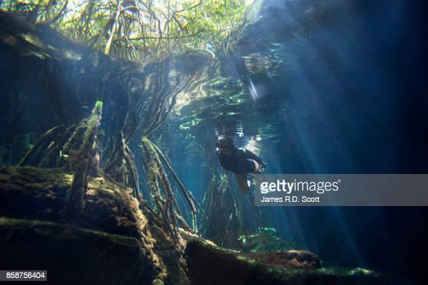 female snorkeler in cenote - mayan riviera stock photos and pictures