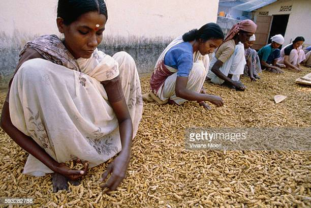 Female spice workers in Kerala India