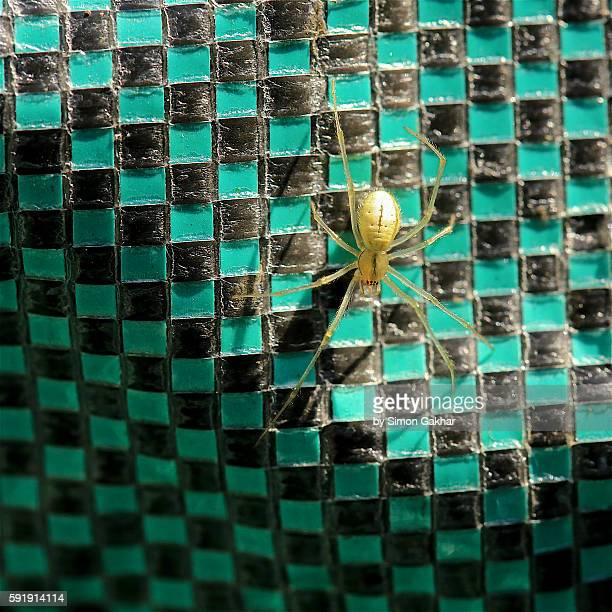 female spider - goose bumps stock pictures, royalty-free photos & images