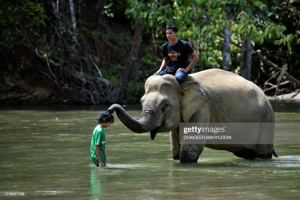 INDONESIA-ANIMAL-ELEPHANT : News Photo