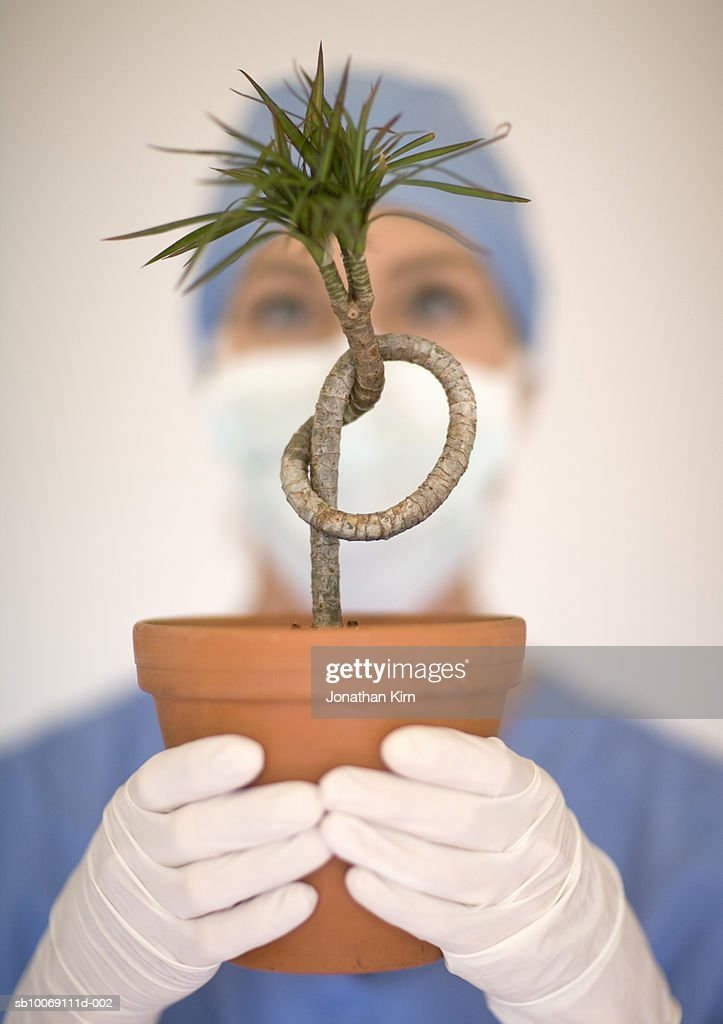 Female surgeon holding knotted plant : Stockfoto