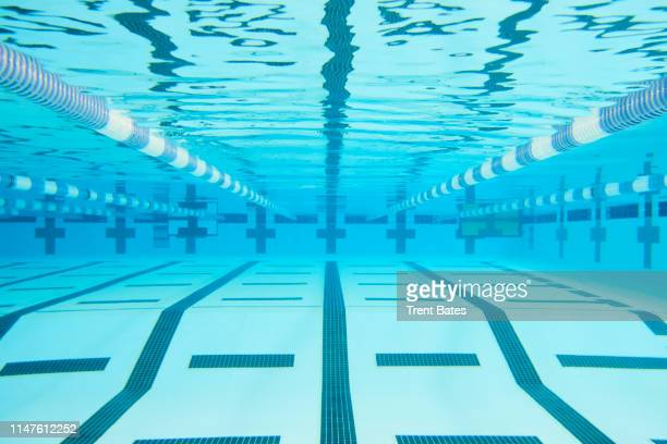 female swimming in pool - length stock pictures, royalty-free photos & images