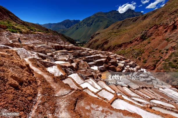 female tourist taking in view of salineras de maras salt evaporation ponds in cusco region, peru - ソルトポンド ストックフォトと画像