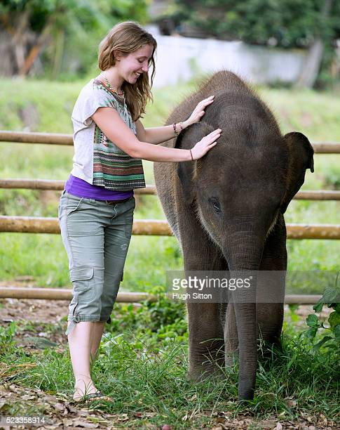 female tourist touching baby elephant, chiang mai, thailand - hugh sitton stock pictures, royalty-free photos & images