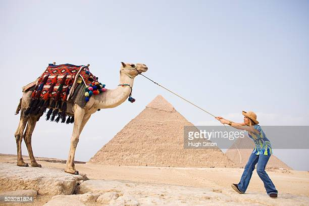 female tourist with camel - hugh sitton stock pictures, royalty-free photos & images