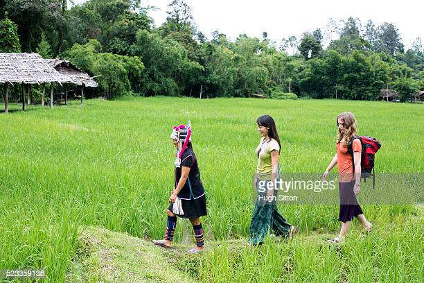 female tourists and guide walking through rice paddy, chiang mai, thailand - hugh sitton stock pictures, royalty-free photos & images